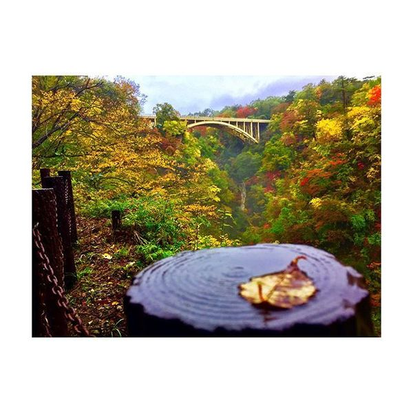 笑顔の架け橋Rainbowプロジェクト - Because no typhoon can stop us from enjoying this autumn feels!❌🌧🍂🍁💃🏼❤️😄😉 #fall #autumn #season #foliage #sightseeing #sweaterweather #tohoku #miyagi...